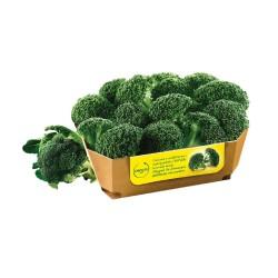 Broccoli  I.Q.F. Orogel